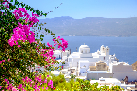 cycladic: Scenic view of traditional Greek cycladic village with flowers foreground and selective focus, Plaka, Greece Stock Photo