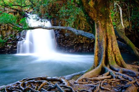 Landscape view of waterfall and old tree near road to Hana, Maui, Hawaii, USA