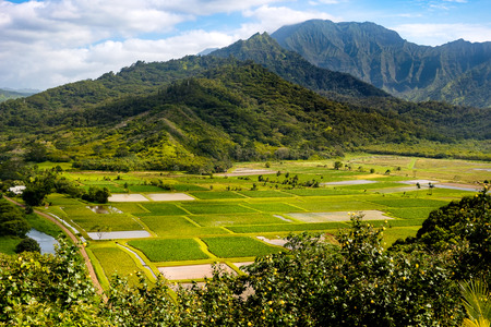 taro: Landscape view of Hanalei valley and green taro fields, Kauai, Hawaii, USA Stock Photo