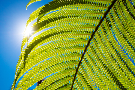 Close up detail of structured fern in backlight