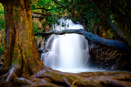destination scenics: Landscape view of waterfall and old tree near road to Hana, Maui, Hawaii, USA