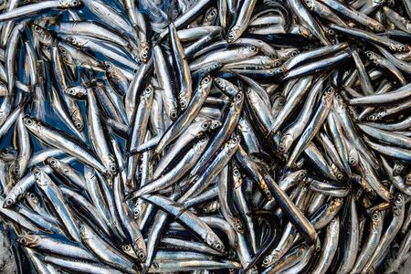 De kleine achtergrond van de sardinesvis op de markt