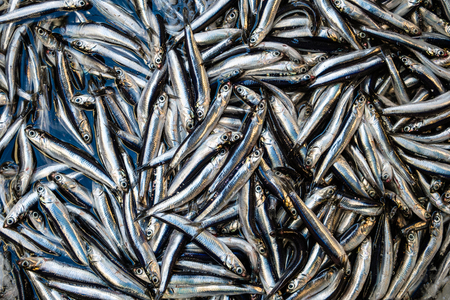 Kleine Sardinen Fisch Hintergrund auf dem Markt Standard-Bild - 78248465