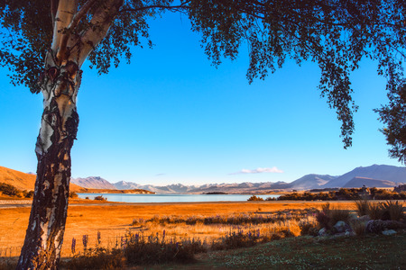 Autumn colorful view of Lake Tekapo framed with a tree at sunrise, Southern Alps, New Zealand