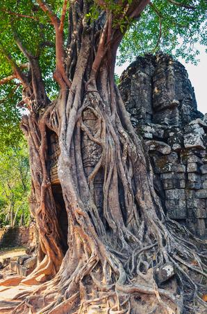 Ancient temple entrance and old tree roots at Angkor Wat, Cambodia