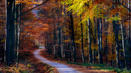 Landscape view of autumn forest colorful foliage, trees and road
