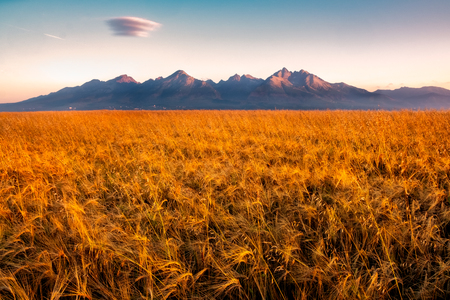 Beautiful landscape view of High Tatras mountains at sunrise with wheat field in foreground, Slovakia 免版税图像