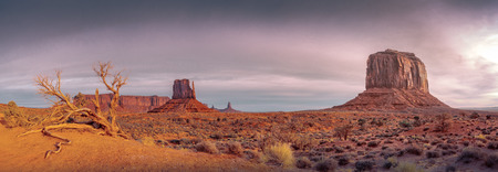 Monument valley vintage landscape view with dry tree and dramatic sky, Arizona, USA