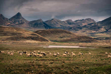 Dramatic rural mountains and hills landscape with sheep in the foreground, Tibet
