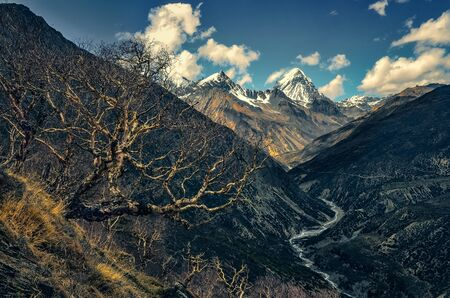 Himalayas mountains valley with white peaks and trees in foreground, Nepal
