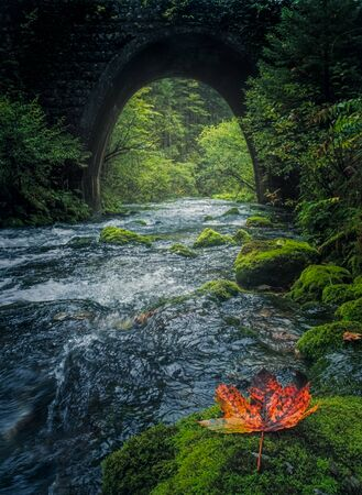 Old stone bridge and flowing river with colorful leaf in the foreground 免版税图像