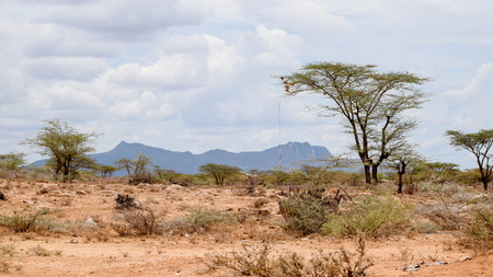 The arid landscapes of Samburu National Reserve, Kenya