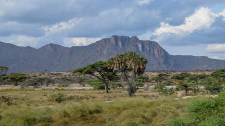 The savannah grassland at Samburu National Park, Kenya