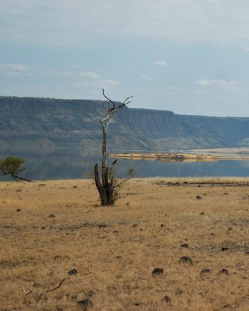 A lone tree against the arid landscapes of Lake Magadi, Kenya