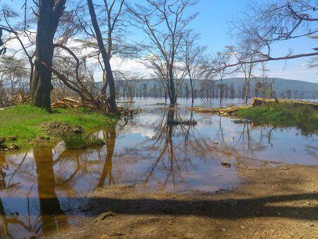 Trees submerged in water at Lake Nakuru, Kenya