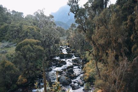A fresh water river in the Rwenzori Mountains, Uganda