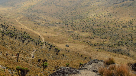 Giant groundsels against a mountain background on the Sirmon Route, Mount Kenya
