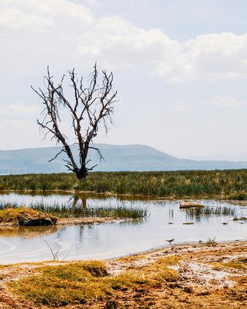 Colorful algae at the shores of Lake Nakuru, Rift Valley, Kenya 版權商用圖片
