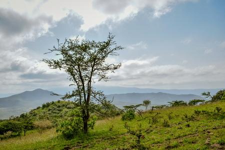 Acacia tree against a mountain background, Oloroka Mountain Range, Rift Valley, Kenya