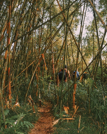 A group of hikers in the bamboo zone of Aberdares, Kenya Stok Fotoğraf