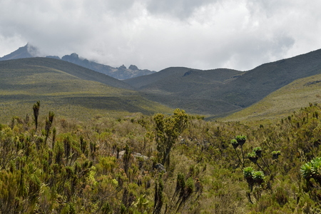 The high altitude moorland of Mount Kilimanjaro