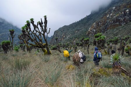 A group of hikers in the panoramic mountain landscapes of Rwenori Mountains, Uganda