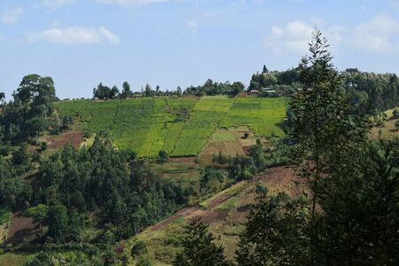 Green tea plantation over mountain slope in rural Kenya Stock Photo