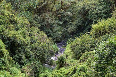 River in the forest, Mount Kenya National Park, Kenya