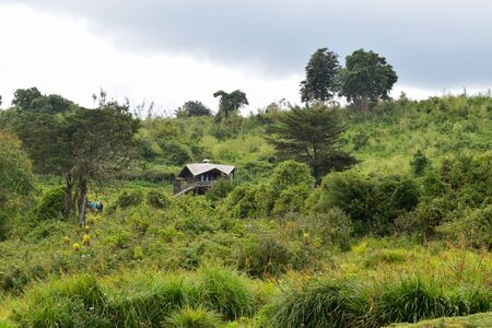 Cabins in the mountains, Castle Forest Lodge in Mount Kenya National Park, Kenya Stock Photo
