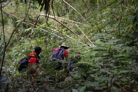 A group of hikers in the rainforest, Aberdare Ranges, Kenya Stock Photo