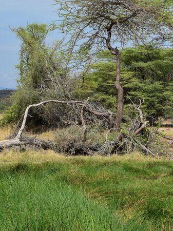 Trees against sky at Samburu National Reserve, Kenya