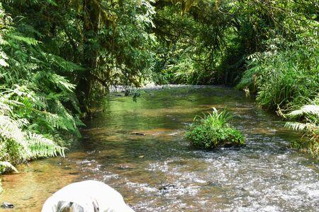 A river in the forest , Mount Kenya, Aberdare Ranges, Kenya