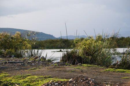 Plant life on the shores of Lake Naivasha, Kenya Stock Photo