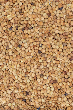 occupying: lentil seeds occupying the entire image frame to be used as background