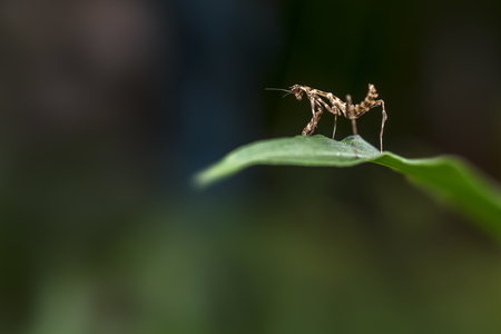 Small insect standing on a leaf as if watching the landscape