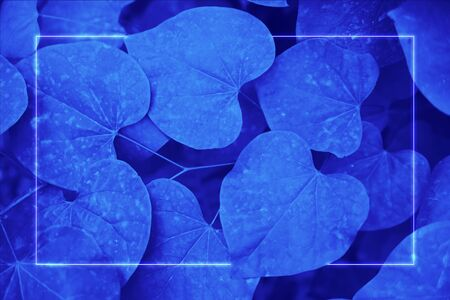 80s retro futuristic background, blue neon glow, leaves in ultraviolet color Reklamní fotografie