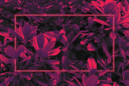 Bright 80s retro background, neon pink glow, tropical leaves in ultraviolet color Reklamní fotografie