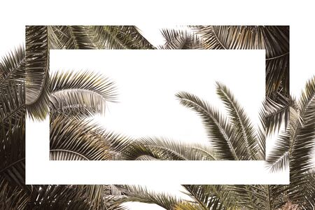Tropical branches of palm trees on a white background, in vintage colors with mirror reflection, surreal composition