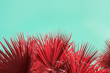Surreal composition with leaves of tropical vegetation, creative abstraction of vegetation from another world, red plants on a bright blue background