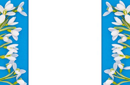 Spring card, background of white flowers of snowdrops on a bright blue background and place for your text