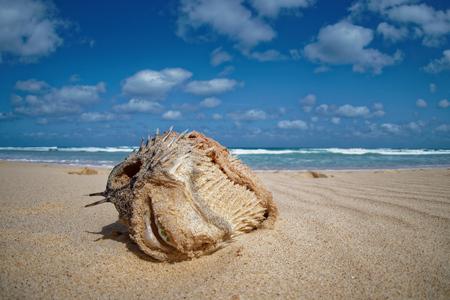 Island Boa Vista in Cape Verde, landscape - seaside
