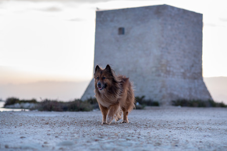 Walk with Kala in Las Salinas de Santa Pola, Alicante, Spain