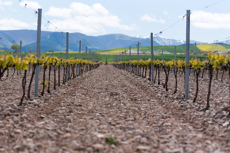 Vineyard landscape in La Rioja, Spain. Stock Photo - 124757407