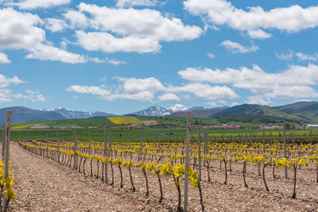 Vineyard landscape in La Rioja, Spain. Stock Photo - 124757413