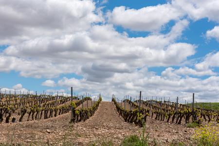 Vineyard landscape in La Rioja, Spain. Stock Photo