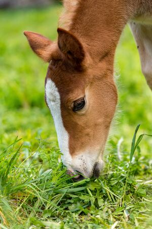 Foals on a summer pasture Standard-Bild