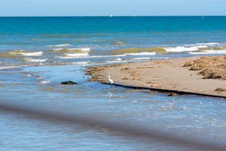 Little Egret on the water in Blue Water in summer in Delta del Ebro Spain