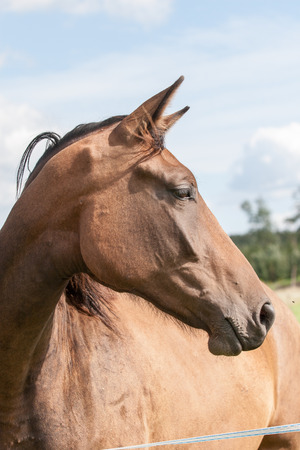 close-up shot of wild horses in the field Stock Photo