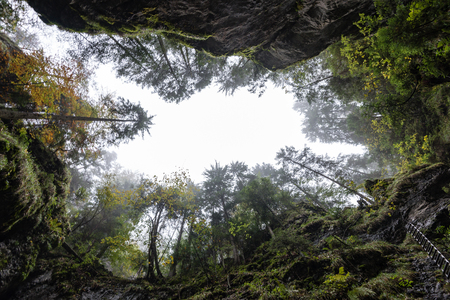 needle tip: view from deep cave to the sky through trees with branches and leaves in autumn colors in mountains