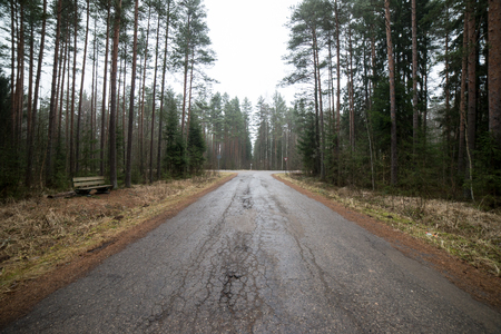 the old road: old road in the forest